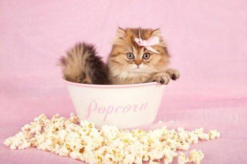 Kediler mısır yiyebilir mi
