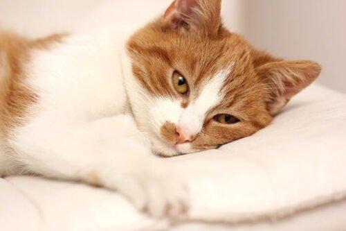 Hastalanmış tedavi edilen kediler 3
